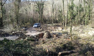 Coppicing completed (nearly)
