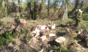 Coppice work