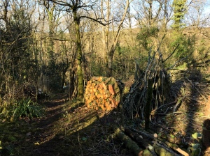Coppiced wood stack