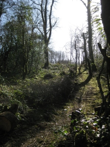 View up to latest coppice compartment