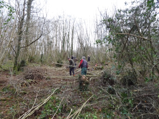 jan Coppice 2016 Bluebell Path work