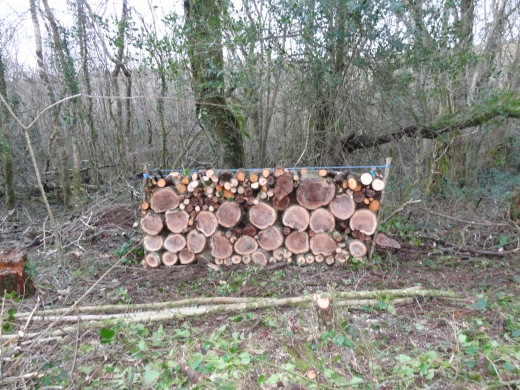 Jan Coppice 2016 Oak Stack