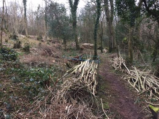 wood-pile-along-path